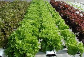 home hydroponics a fun way to grow top