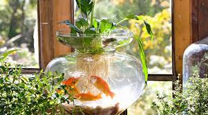 splash with these indoor water gardens