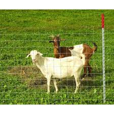 Fence 48 X 330 For Goat And Sheep Galvanized Wire Class 3