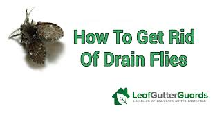 how to get rid of drain flies sewer