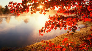 autumn leaves wallpapers cute autumn