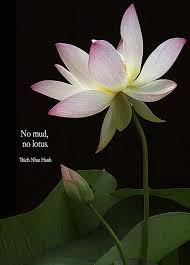 pin by tashi wangdi on tashi buddhist quotes flower quotes