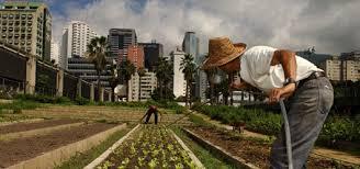urban farming in developing vs