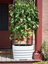 urban gardening with vegetables in