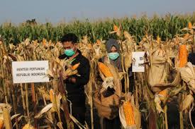 Produksi Pertanian Jateng Tak Alami Penurunan - Pemerintah ...
