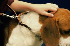 5 Ways To Avoid Sores Burns On Your Dog S Neck Electric Dog Collars