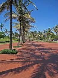 palm trees paving row sky blue