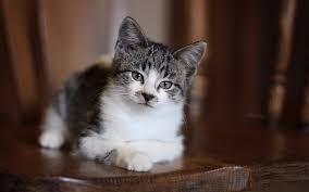 lovely cat hd 7024779