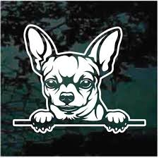 Short Haired Chihuahua Peeking Car Decals Stickers Decal Junky