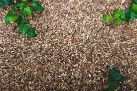 Image result for mulch