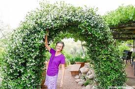 Star Jasmine Care And Growing Tips Joy Us Garden