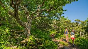 craggy gardens trail hiking near