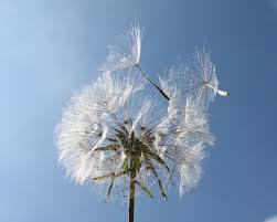 rumput cabang salju musim dingin