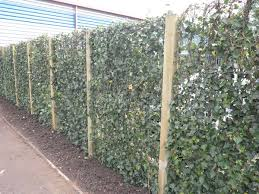 A Living Fence Frogley Fencing
