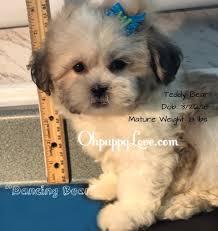 ohpuppylove dog breeds morkie