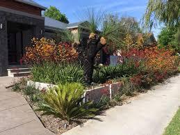 plants kangaroo paws and grass tree