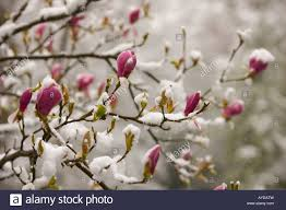 Image result for snow in spring photos