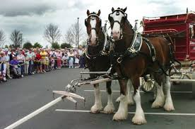 budweiser clydesdales ing to orlando