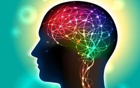 Znalezione obrazy dla zapytania: mózg
