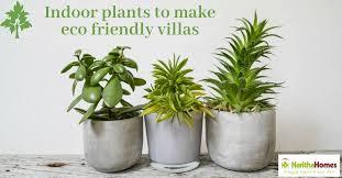 indoor plants to make eco friendly villas