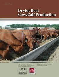 Pdf Beef Cow Calf Production