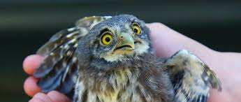 9 bird scares that will work its magic