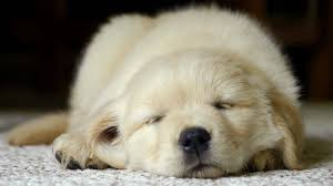 can carpet cleaners remove pet odors