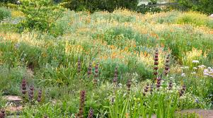 meadow garden design ideas sunset