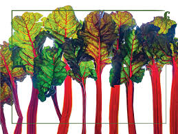 Rainbow Chard 18 X 24 Vinyl Wall Decal Poster Local Foods Farmer S Market Vegetables 32 00 Nutrition Education Store