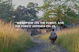 a celebration of rainforest