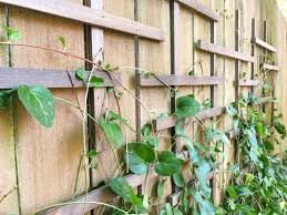 Add A Clematis Trellis To Your Boring Flat Fence The Handyman S Daughter