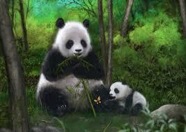 wallpapers panda bears group 60