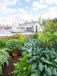 rooftop vegetable garden better homes