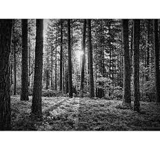 Black And White Forest Wall Mural Tenstickers