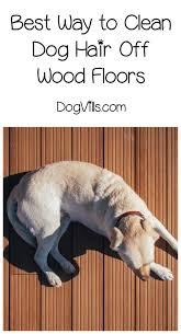clean dog hair off hardwood floors