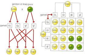 Microsoft PowerPoint - La genetica e l'ereditariet340 [modalit ...