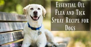 essential oil flea and tick spray