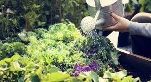 grow a vegetable garden in dubai