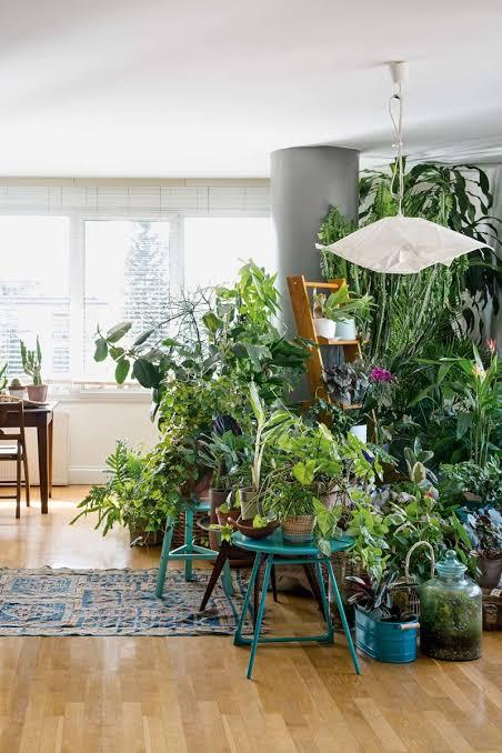 Resultado de imagem para urban jungle