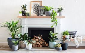 Bring Your Indoors To Life With Plants Bunnings Warehouse