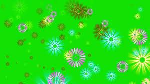 flower petals falling green screen star