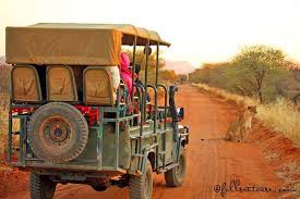 know before going on safari in africa