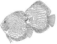 80 Beste Afbeeldingen Van Vissen Schilderen Tekenen In 2020