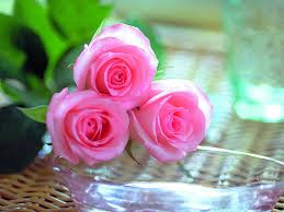 صور الزهور والورود