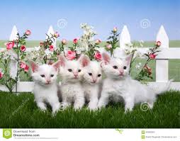 Four White Kittens In A Flower Garden Stock Image Image Of Outdoor Fence 94580363