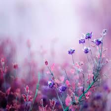 صور ورد خلفيات خلفيات ورود و زهور عيون الرومانسية