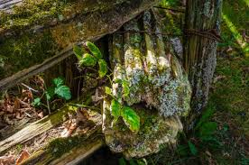 Closeup Of Old Weathered Cedar Fence End And Posts With Moss And Lichen Stock Photo Download Image Now Istock