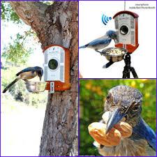 gift ideas for bird and bird