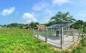 Solar Water Pumps Things To Know And Tips For Use 2020