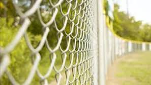 High Desert Plants That Grow On A Chain Link Fence Home Guides Sf Gate